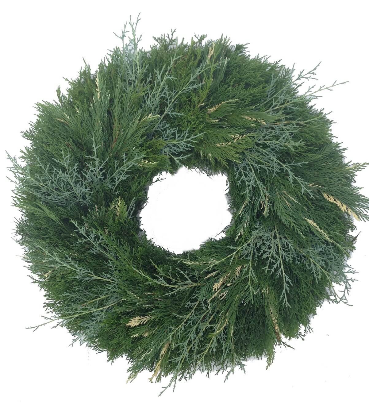 Cedar Carolina Saphire Variegated Leyland Christmas Wreath