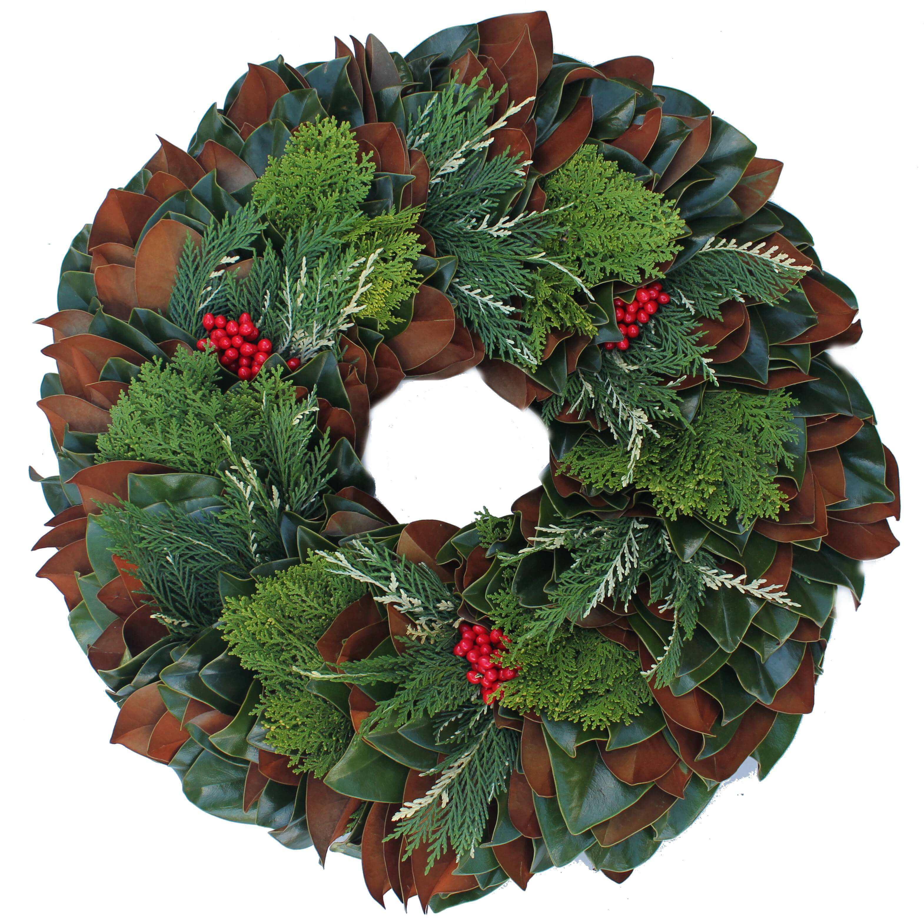 Magnolia Arbavida and Variegated Leylend Christmas Wreath